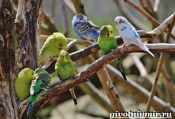 Виды-попугаев-Описания-названия-и-особенности-попугаев-1