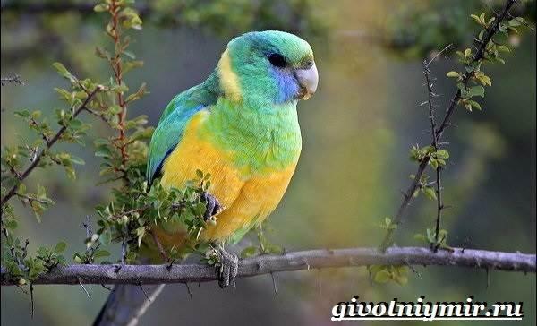 Виды-попугаев-Описания-названия-и-особенности-попугаев-11