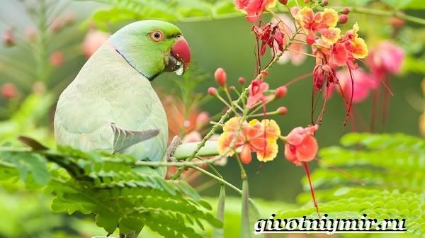 Виды-попугаев-Описания-названия-и-особенности-попугаев-12