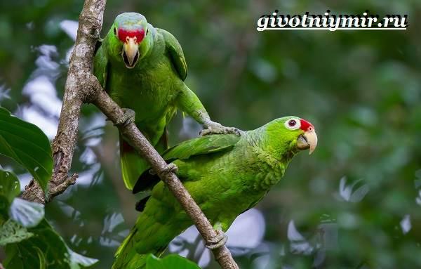 Виды-попугаев-Описания-названия-и-особенности-попугаев-13