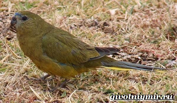 Виды-попугаев-Описания-названия-и-особенности-попугаев-14