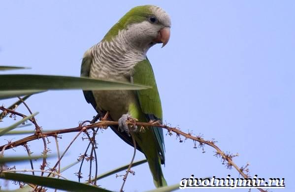 Виды-попугаев-Описания-названия-и-особенности-попугаев-15