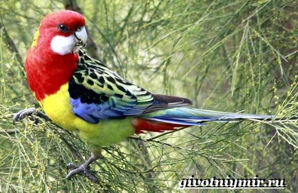 Виды-попугаев-Описания-названия-и-особенности-попугаев-16