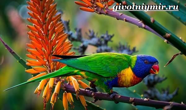Виды-попугаев-Описания-названия-и-особенности-попугаев-17