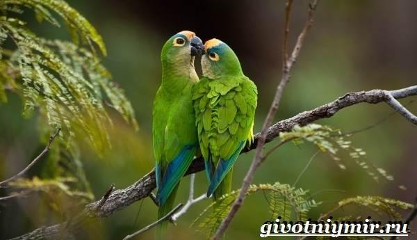 Виды-попугаев-Описания-названия-и-особенности-попугаев-18
