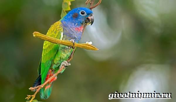 Виды-попугаев-Описания-названия-и-особенности-попугаев-19
