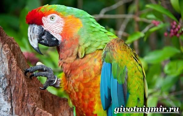 Виды-попугаев-Описания-названия-и-особенности-попугаев-21