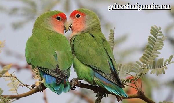 Виды-попугаев-Описания-названия-и-особенности-попугаев-4