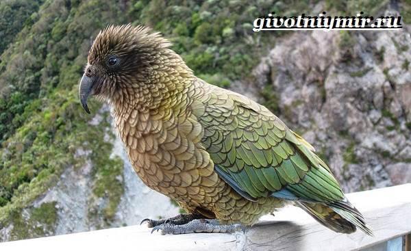 Виды-попугаев-Описания-названия-и-особенности-попугаев-5