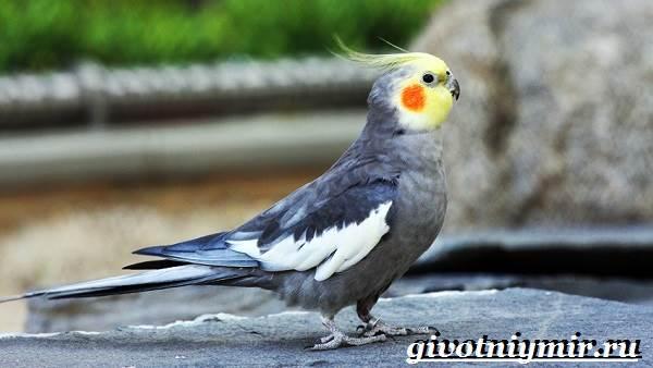 Виды-попугаев-Описания-названия-и-особенности-попугаев-6