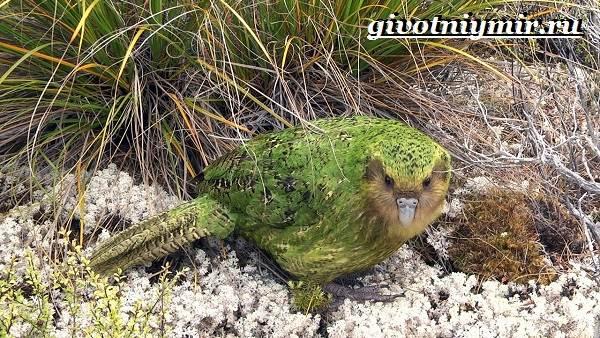 Виды-попугаев-Описания-названия-и-особенности-попугаев-7