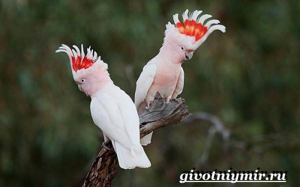 Виды-попугаев-Описания-названия-и-особенности-попугаев-8