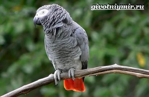 Виды-попугаев-Описания-названия-и-особенности-попугаев-9