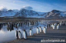 Животные Антарктиды. Описание и особенности животных Антарктиды