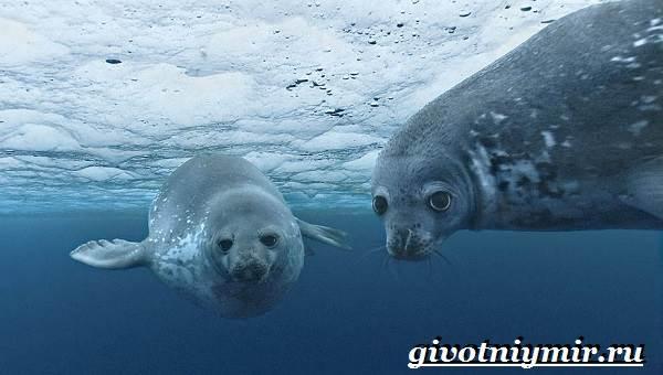 Животные-Антарктиды-Описание-и-особенности-животных-Антарктиды-2
