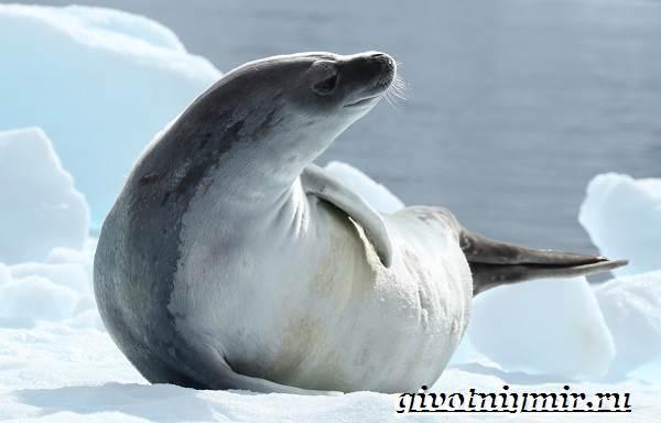 Животные-Антарктиды-Описание-и-особенности-животных-Антарктиды-3