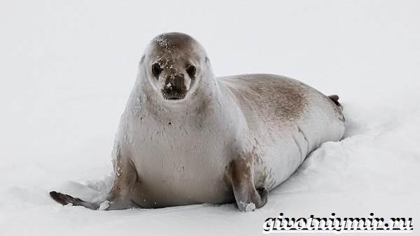 Животные-Антарктиды-Описание-и-особенности-животных-Антарктиды-5