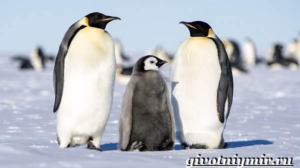 Животные-Антарктиды-Описание-и-особенности-животных-Антарктиды-7