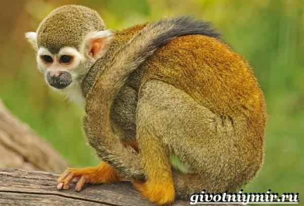 Животные-Бразилии-Названия-описания-и-особенности-животных-Бразилии-11