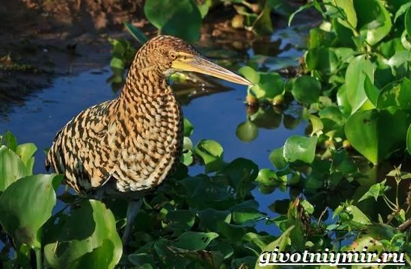Животные-Бразилии-Названия-описания-и-особенности-животных-Бразилии-13