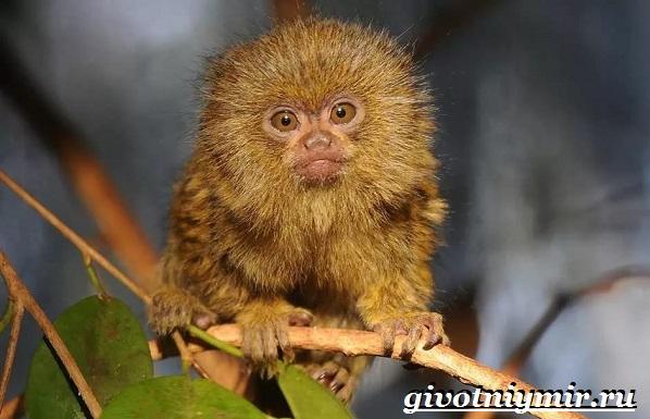 Животные-Бразилии-Названия-описания-и-особенности-животных-Бразилии-16