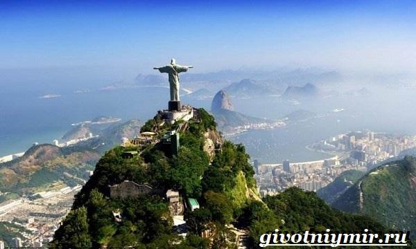 Животные-Бразилии-Названия-описания-и-особенности-животных-Бразилии-8