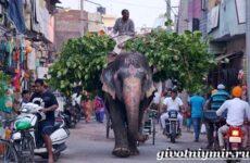 Животные Индии. Описание и названия животных Индии