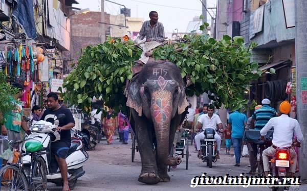Животные-Индии-Описание-и-названия-животных-Индии-1