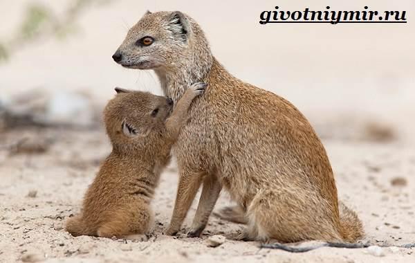 Животные-Индии-Описание-и-названия-животных-Индии-10