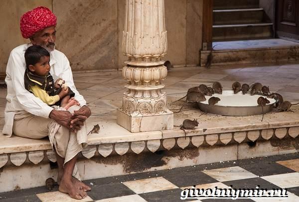 Животные-Индии-Описание-и-названия-животных-Индии-11