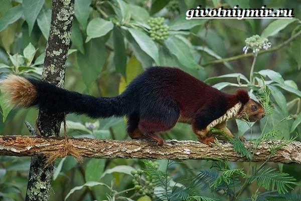 Животные-Индии-Описание-и-названия-животных-Индии-12