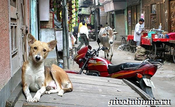 Животные-Индии-Описание-и-названия-животных-Индии-14