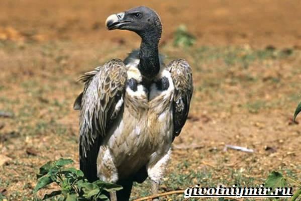 Животные-Индии-Описание-и-названия-животных-Индии-15