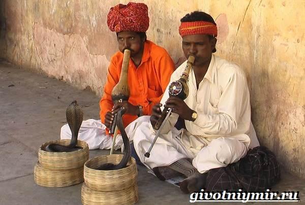 Животные-Индии-Описание-и-названия-животных-Индии-2