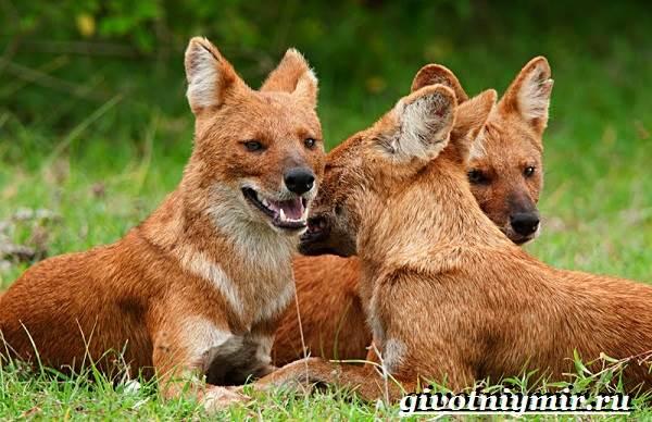 Животные-Индии-Описание-и-названия-животных-Индии-23
