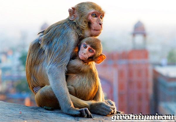 Животные-Индии-Описание-и-названия-животных-Индии-24