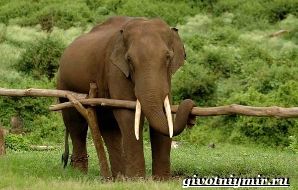 Животные-Индии-Описание-и-названия-животных-Индии-4