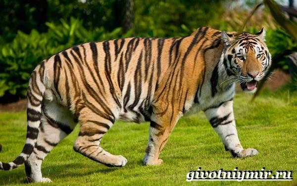 Животные-Индии-Описание-и-названия-животных-Индии-5