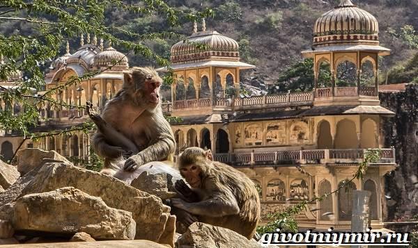 Животные-Индии-Описание-и-названия-животных-Индии-7