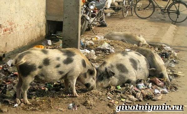 Животные-Индии-Описание-и-названия-животных-Индии-8