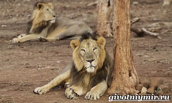 Животные-Индии-Описание-и-названия-животных-Индии-9