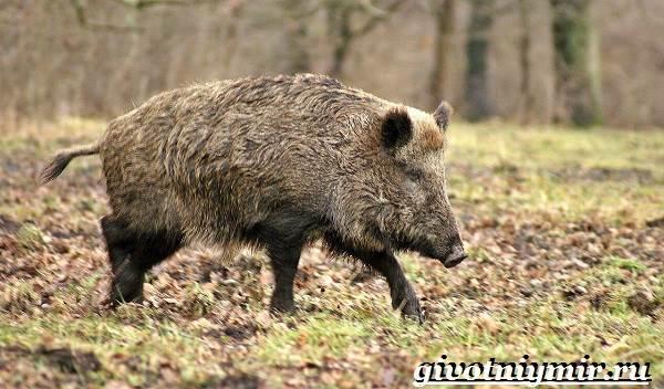 Животные-Крыма-Описания-названия-и-особенности-животных-Крыма-10