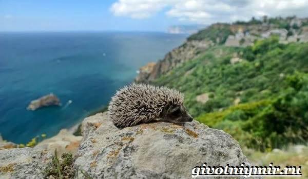 Животные-Крыма-Описания-названия-и-особенности-животных-Крыма-2