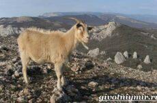 Животные Крыма. Описания, названия и особенности животных Крыма