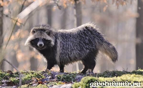 Животные-Крыма-Описания-названия-и-особенности-животных-Крыма-9