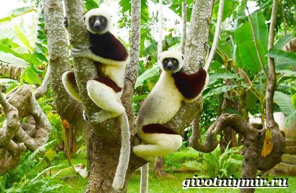 Животные-Мадагаскара-Описание-и-особенности-животных-Мадагаскара-1