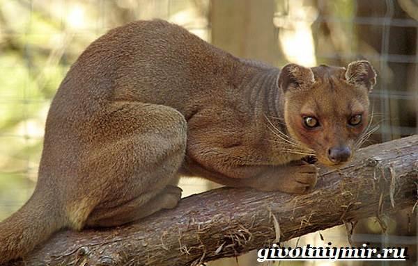 Животные-Мадагаскара-Описание-и-особенности-животных-Мадагаскара-10