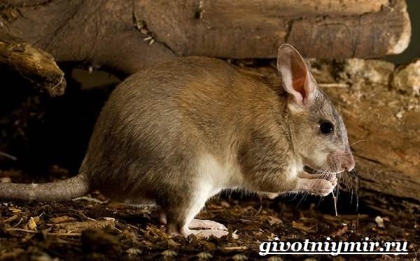Животные-Мадагаскара-Описание-и-особенности-животных-Мадагаскара-11