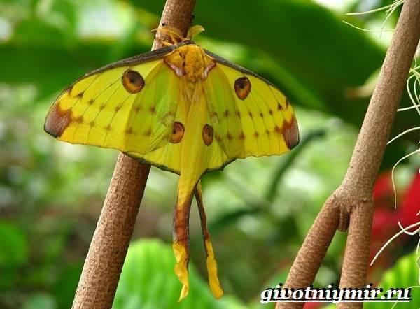 Животные-Мадагаскара-Описание-и-особенности-животных-Мадагаскара-13