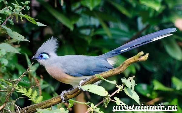 Животные-Мадагаскара-Описание-и-особенности-животных-Мадагаскара-14